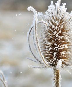 Téli növénytakarás